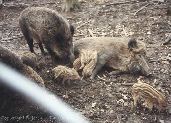Animals in the Czech Republic