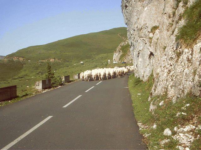 Sheep at Col D'Aubisque