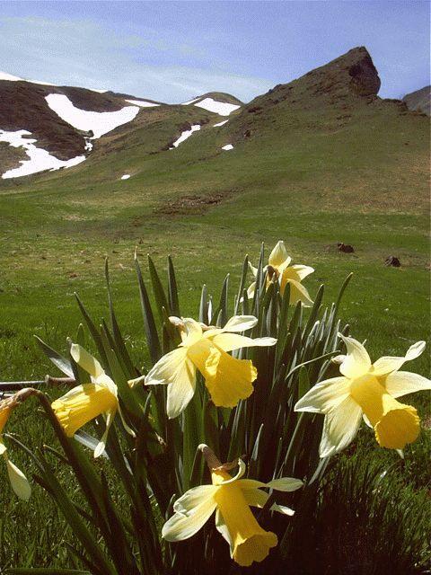 Flowers in Pyrenees